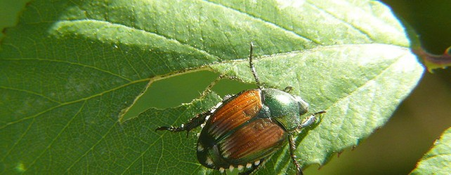 Gardening On a Budget: Organic Pest Control with DIY Bug Repellent