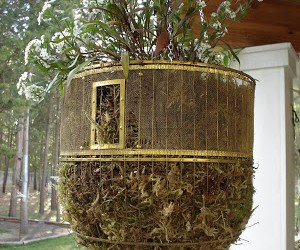 Spruce Up your Garden this Spring with a Frugal DIY Birdcage Planter