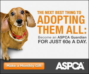 Join ASPCA – Your Gift Could Save A Life